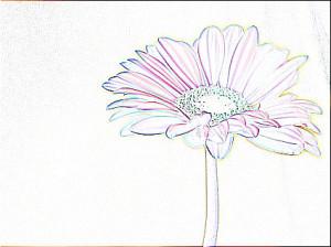 flower_pa_neg